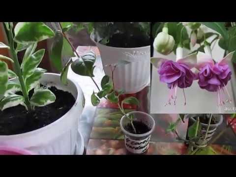 Обзор моих комнатных цветов.Review of my indoor flowers.