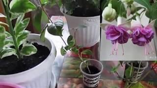 видео Комнатные растения – красота и уют