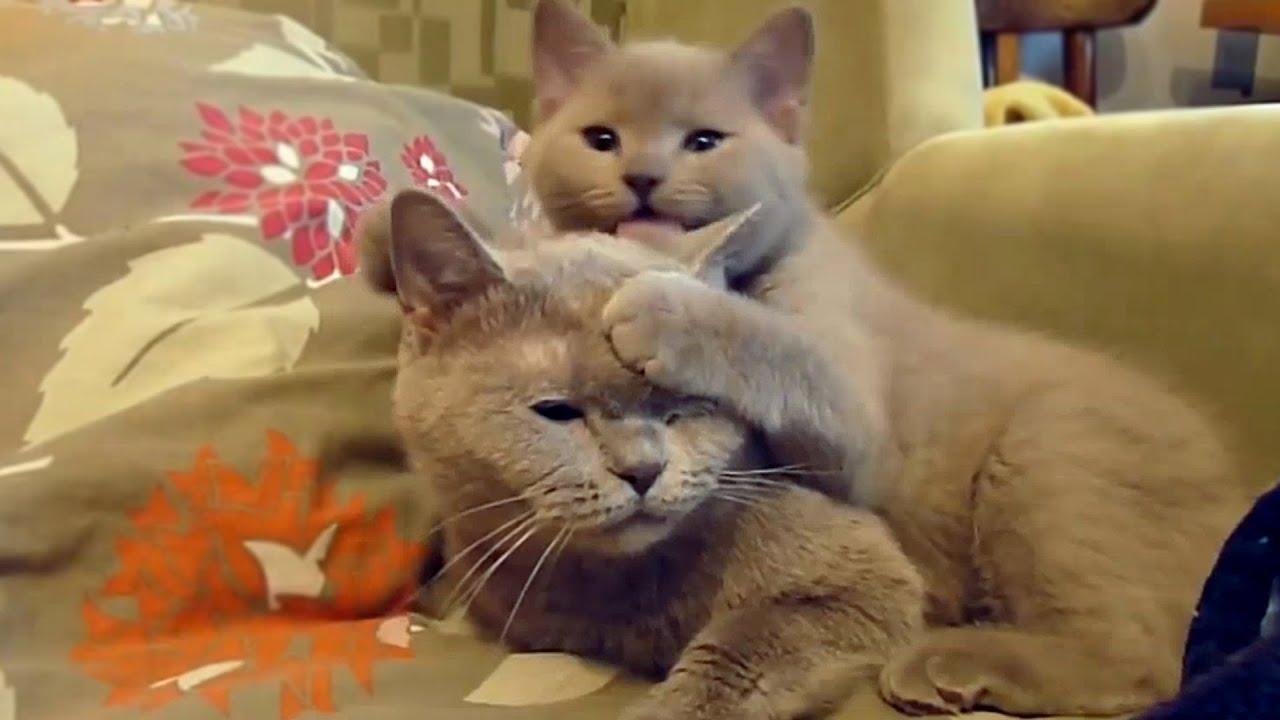Yan Show: Котики, собачки и хрушки - YouTube