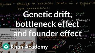Genetic drift, bottleneck effect and founder effect | Biology | Khan Academy