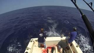 Yellowfin Tuna Blitz On The Wasabi