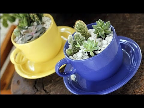 Идеальные комнатные растения для кухни.