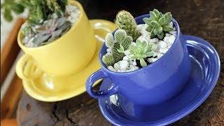 видео Растения на кухне