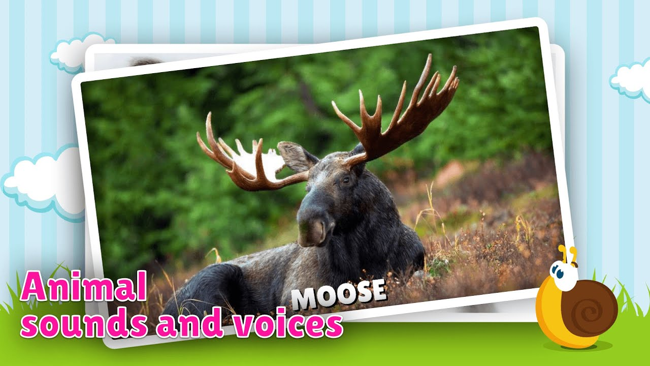 Animal Flashcards Sounds Learn About Animals And Their Names In Giant Flashcard English For Babies Toddlers
