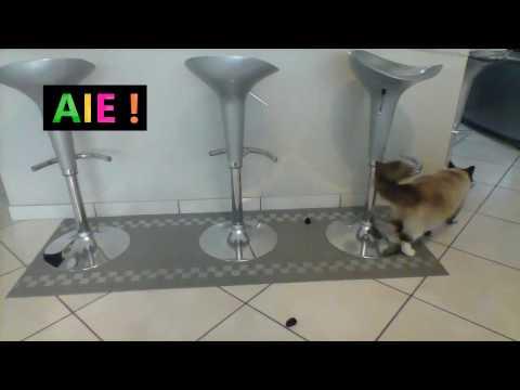 Hardi et la souris noire