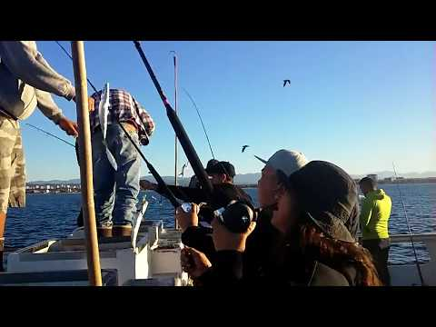 Catching Mackerel in Santa Monica Bay