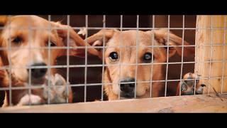 """Приют для бездомных животных """"Ванечка"""""""