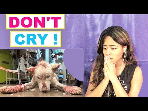 Try Not To Cry: Homeless Dog Living in Trash - Watch what happens next! Reaction