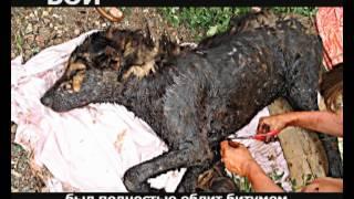 Cохраним жизнь бездомным животным