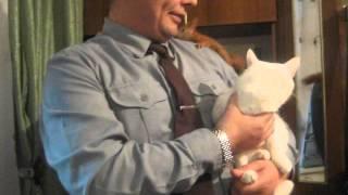Кошка в шоке от белки