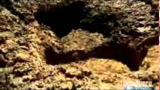 Bear Grylls Man Vs Wild -  Northern  Kenya Part 2