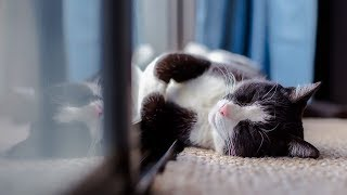 How to Reduce Fever in Cats - Method 1 - Taking Care of Cats