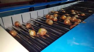 감자, 양파, 고구마 선별기, grader, size …