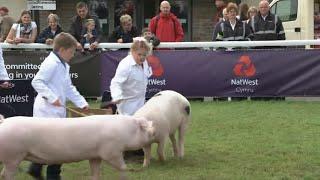 Trinwyr Ifanc y Moch | Young Pig Handlers