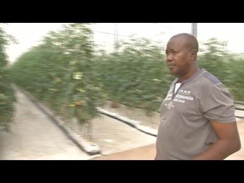 Mali, PRATIQUE DE L'AGRICULTURE SOUS SERRE