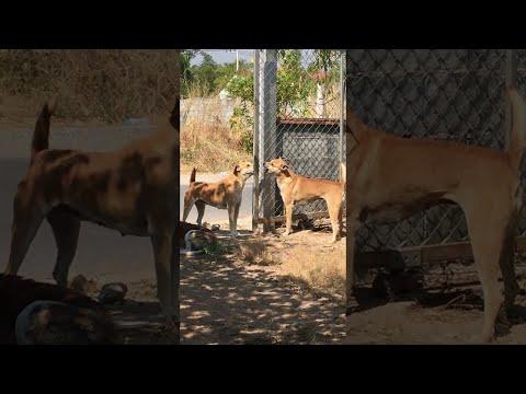 Jason Carr - WATCH: Dogs Argue Through A Fence...Sort Of