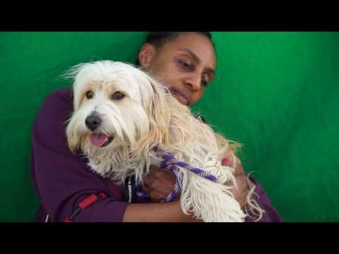 A5024270 Googie | Lhasa Apso/Wheaten Terrier