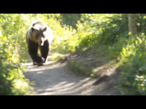 Clint August - Grizzly Bear Encounter Aug 2016 Montana Glacier National Park
