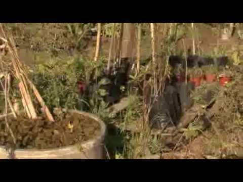 Remodelan el vivero municipal de plantas nativas de san for Vivero plantas nativas