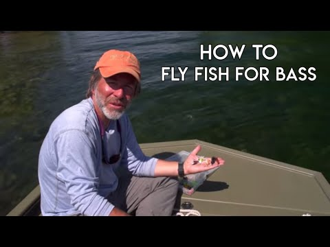 Bass on a Fly - How To