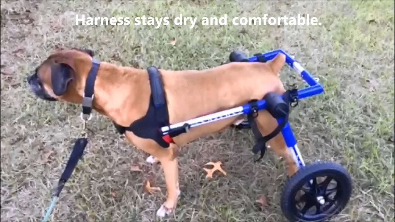 Walkin Wheels Dog Wheelchair Bathroom Break