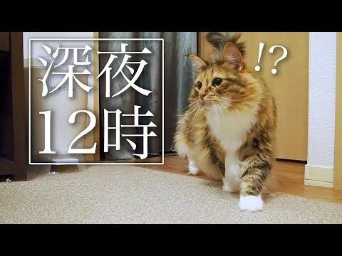 【心霊】聞き覚えのない音が...ちゃちゃ出動!!