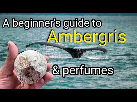 Ambergris in perfumes | A Beginner's Guide