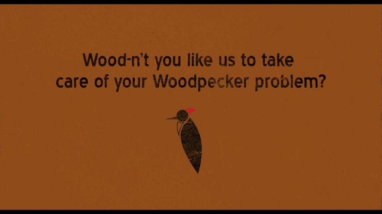 getting rid of woodpeckers & repairing woodpecker holes - youtube