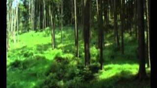Мудрец Йога Васиштха - Обучение Рамы и полное понимание истинного абсолюта. 009