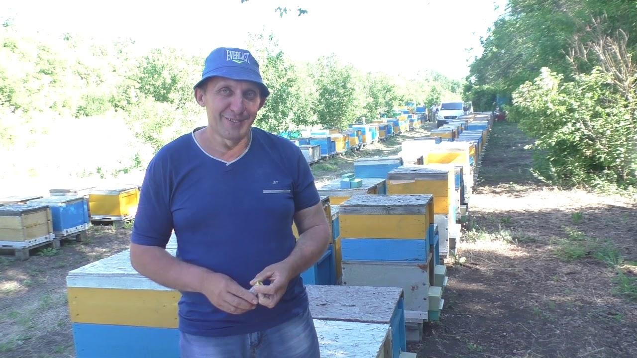 Интервью у пчеловода Александра Тарасова.