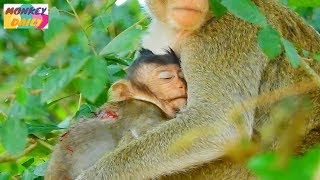 Oh pity Lizza situation hurt & silent with deeply injure | CaCa warm & hug her | Monkey Daily 4592