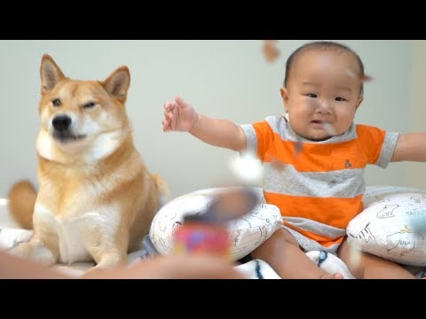 Scaring Dog and Baby with Confetti Poppers. [Ep. 5]