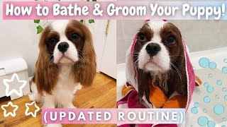 How to Bathe & Groom Your Puppy! | *Updated Routine* | Cavalier King Charles Spaniel