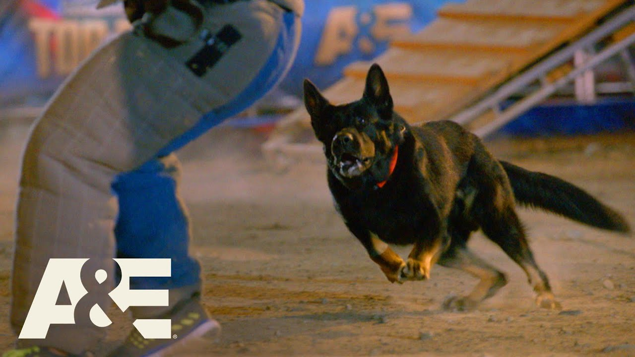 Purple Heart Winning K9 RACES to Beat Live PD's Team Fuze | America's Top Dog (Season 1) |