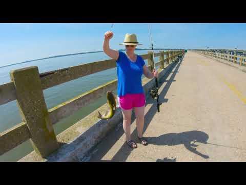 MYSTERY CATCH Off The Bill Burton Fishing Pier - June 2019
