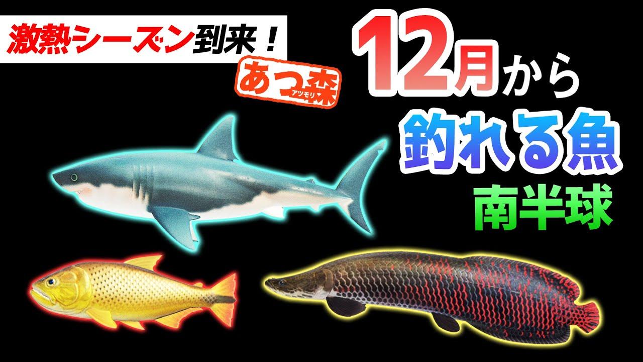 値段 サメ どうぶつ 森 の