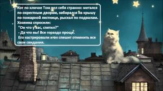 Анекдоты про котов/ч  6 /Коты  Кошки  Котята /  Котэ Саратовский / Приколы  Юмор