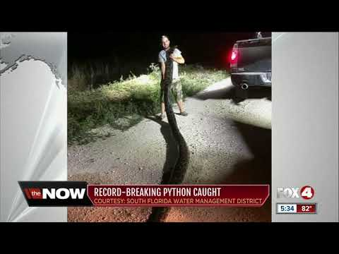 Amy Lynn - Kyle From Homestead Captured A 17 FOOT PYTHON!!