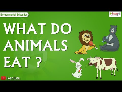 Kids Science - What and How do Animals Eat?