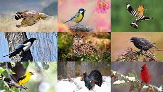 Лесные Птицы Познавательное видео для Детей и Взрослых