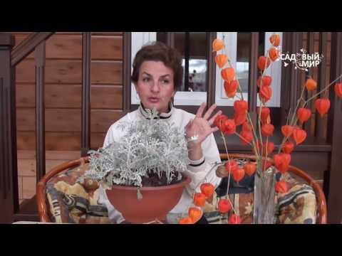 Томаты с базиликом на зиму