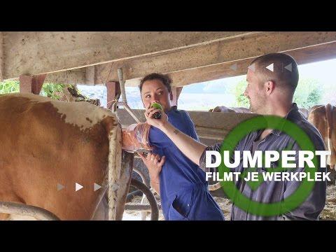Dumpert Filmt Je Werkplek S01E01: Inseminator