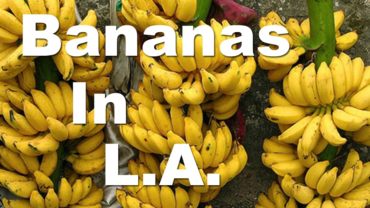 youtube how to grow a banana tree from seed