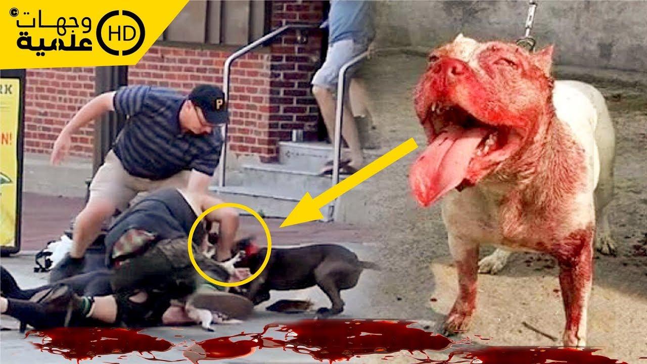 أغرب حالات قتلت فيها الحيوانات الأليفة مالكيها..ولكن كيف حدث ذلك ؟!