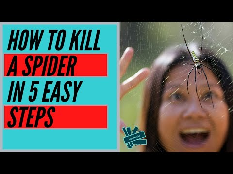 how-to-kill-a-spider-in-5-easy-steps.-(funny-life-hacks-parody)