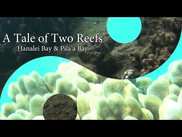 Tale of Two Reefs