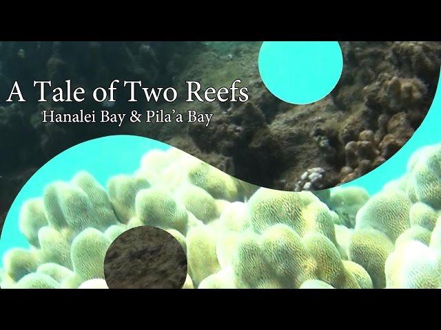 Tale of Two Reefs