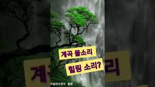 [자연다큐] 가을 뀌뚜라미 계곡 물소리 산새 소리 힐링…