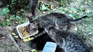 Найден  дымчатый кот,с пушистым хвостом и котята