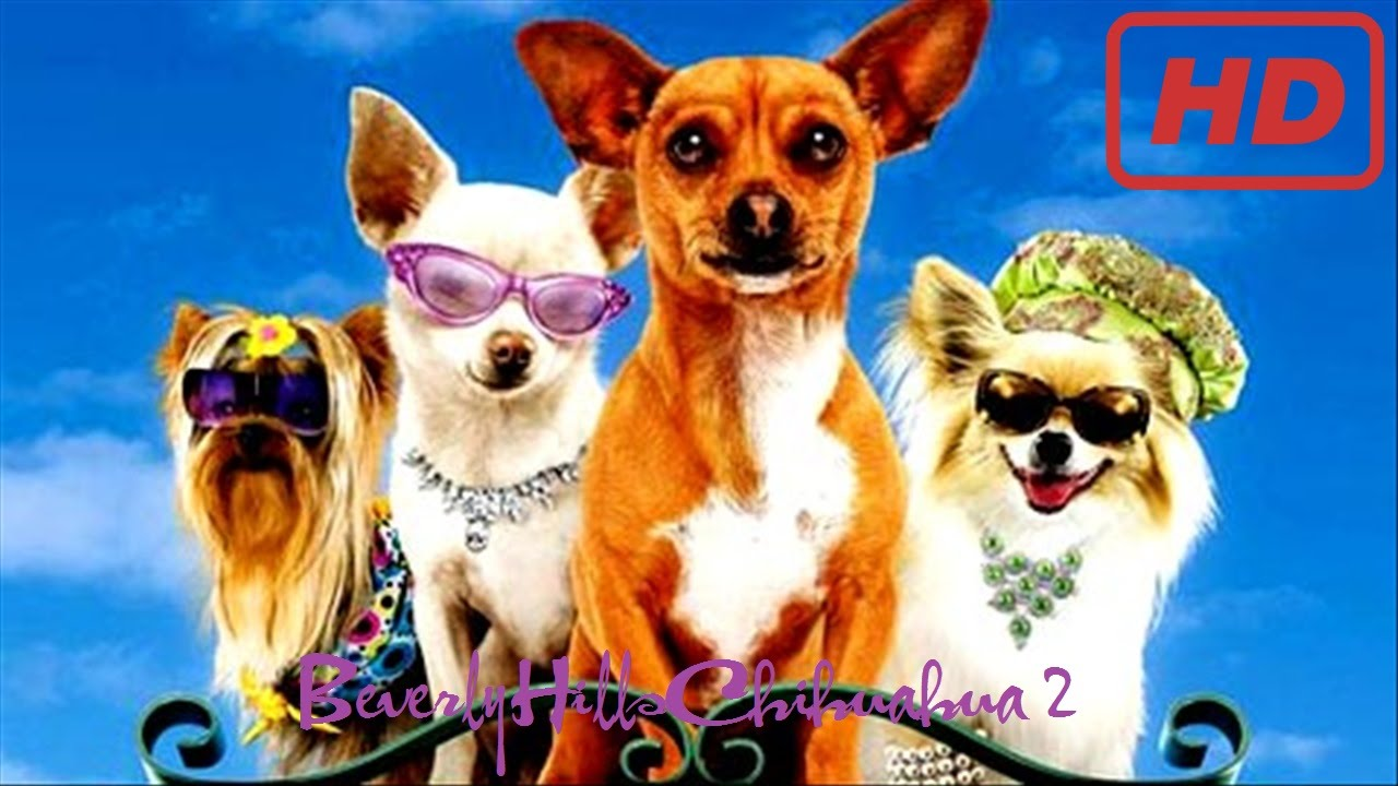 beverly chihuahua beverly hills chihuahua 2 2011 youtube 4181